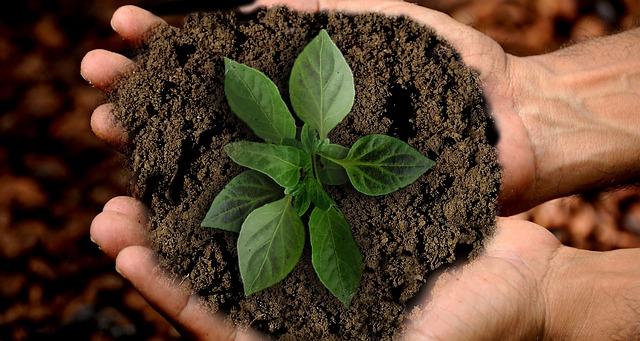 Global Compacts 10 principer: världens största företagsinitiativ inom hållbarhet